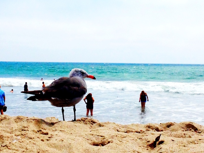 hanging out at the beach in santa monica, california.